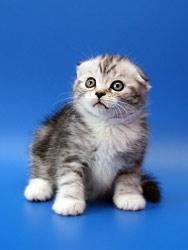 Л клички котам
