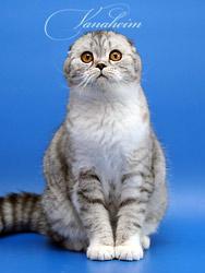 """,""www.vancats.ru"
