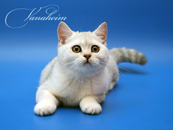 Кличка для кота татарского