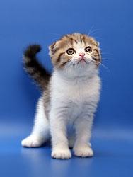 Клички котам на р