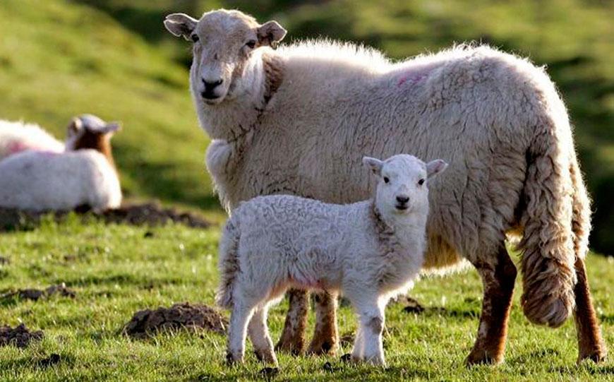 скачать овцеводство игру - фото 3