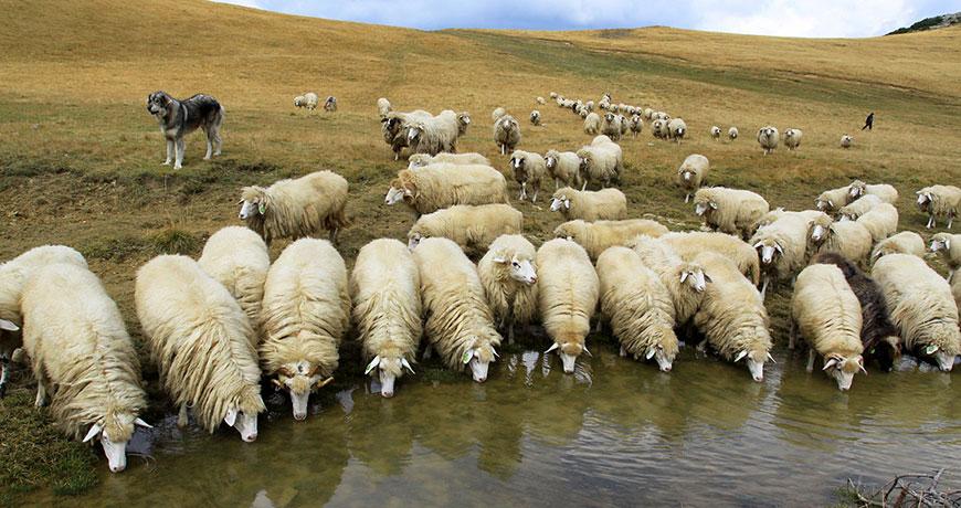 скачать овцеводство игру - фото 5