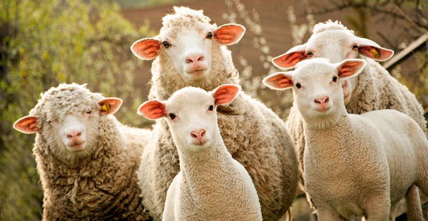 скачать овцеводство игру - фото 2