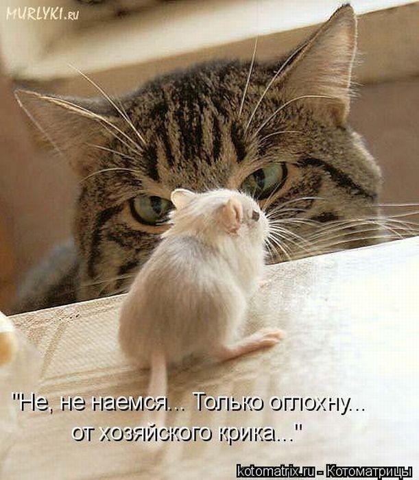 смешные картинки животных картинки