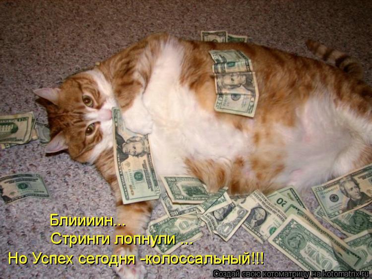 Смешные коты и котята картинки