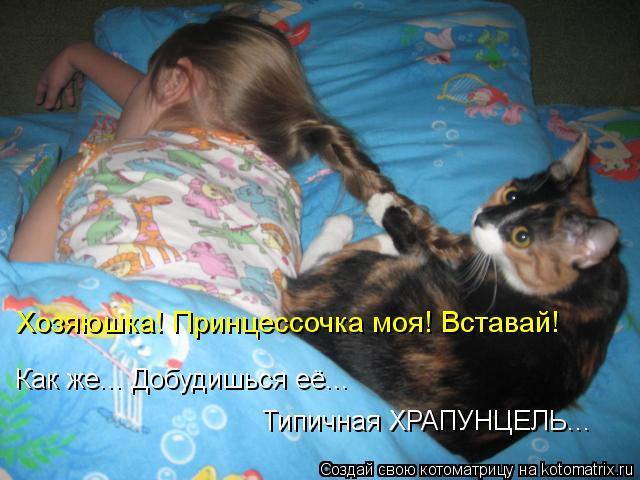 Котята и кошки в Новосибирске  Фото и цены  НГСОБЪЯВЛЕНИЯ