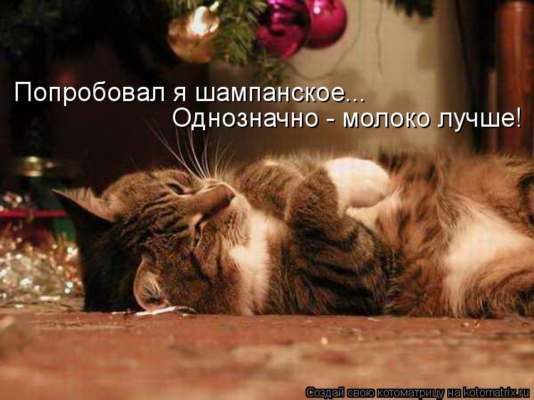 http://www.vancats.ru/images_dr/foto/kotomatritsa_3rX.jpg