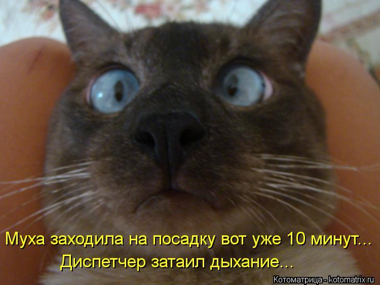Смотреть смешных фото котов