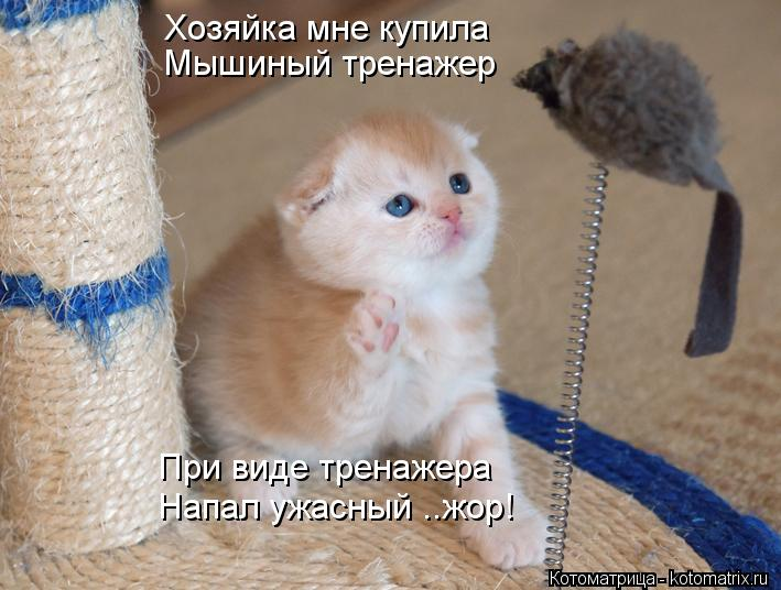 Смешные животные смешно котята