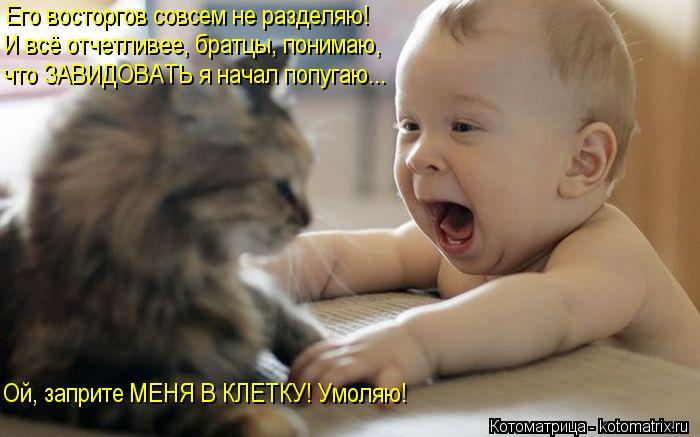 http://www.vancats.ru/images_dr/foto/kotomatritsa_g2.jpg
