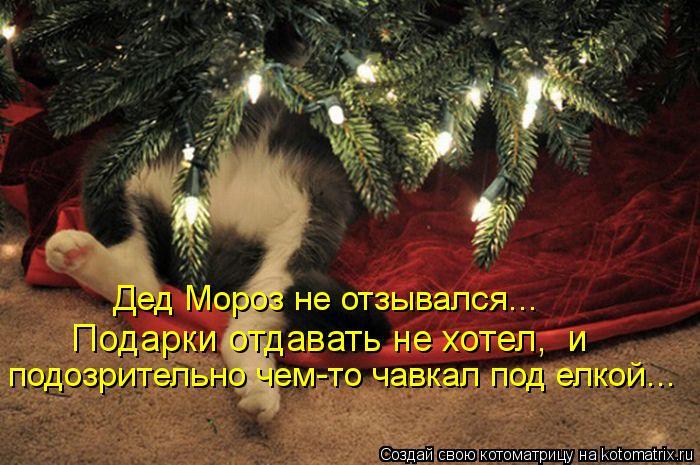 Котята забавные смешные фото кошек